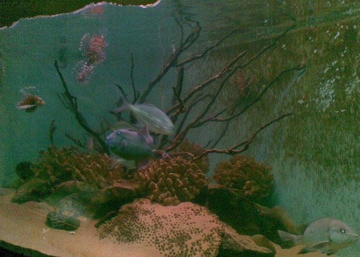 Dehiwala Zoological Garden 8