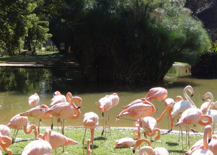 Dehiwala Zoological Garden 7