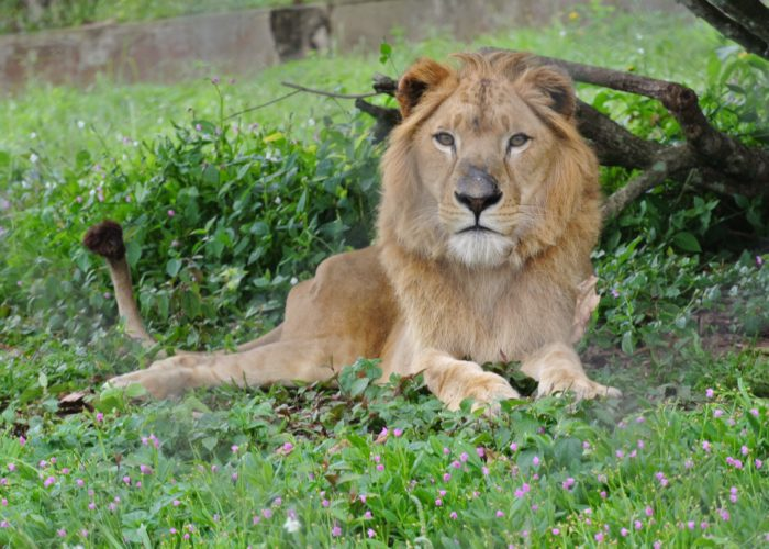 Dehiwala Zoological Garden 1