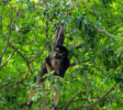 Dehiwala Zoological Garden 11