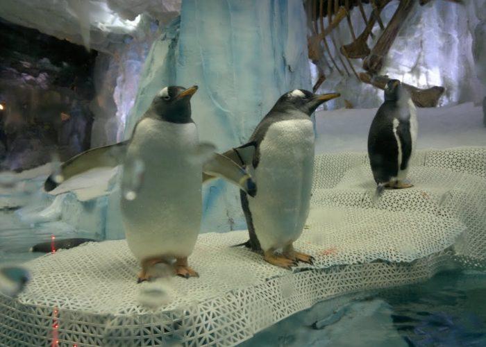 Dehiwala Zoological Garden 3