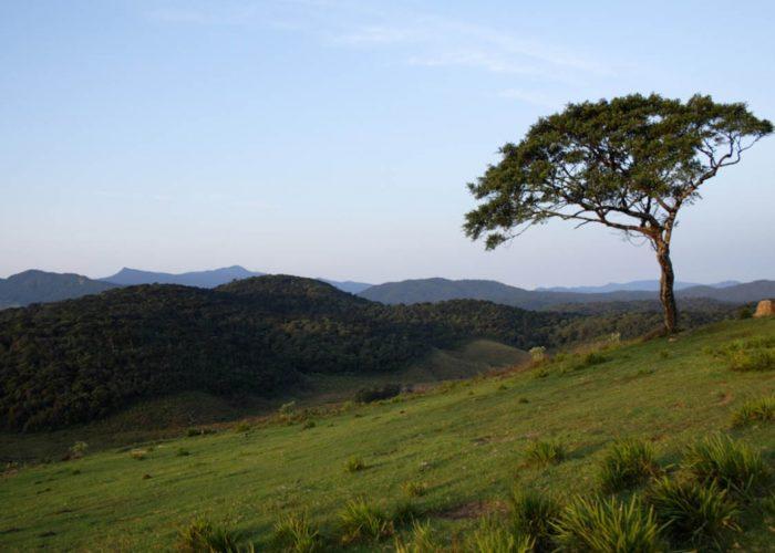 Horton plains national park 2