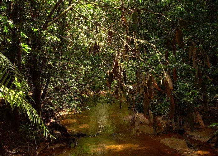 Sinharaja Forest national park