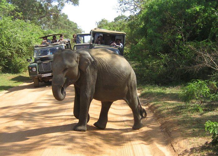 Yala-park-jeep2