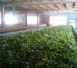 mlesna-tea-factory