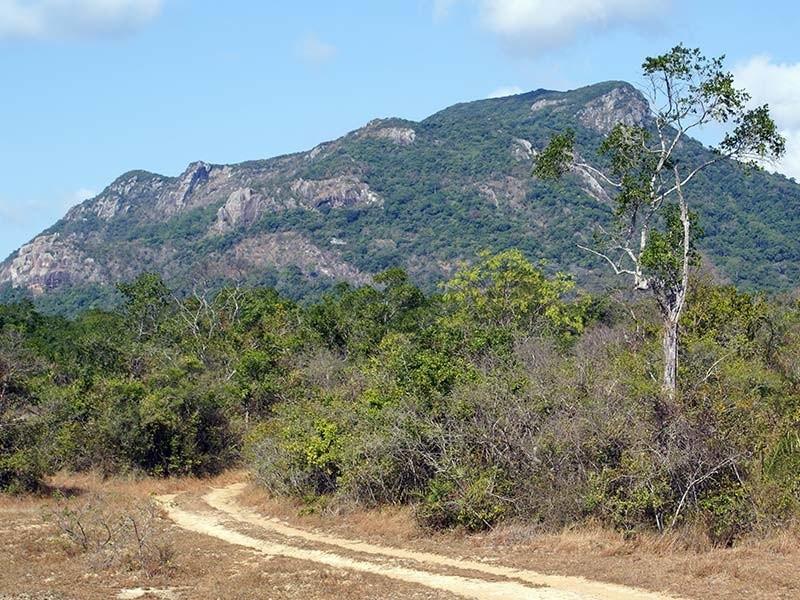 Ritigala Strict Natural Reserve Sri Lanka Search On The Math Wallpaper Golden Find Free HD for Desktop [pastnedes.tk]
