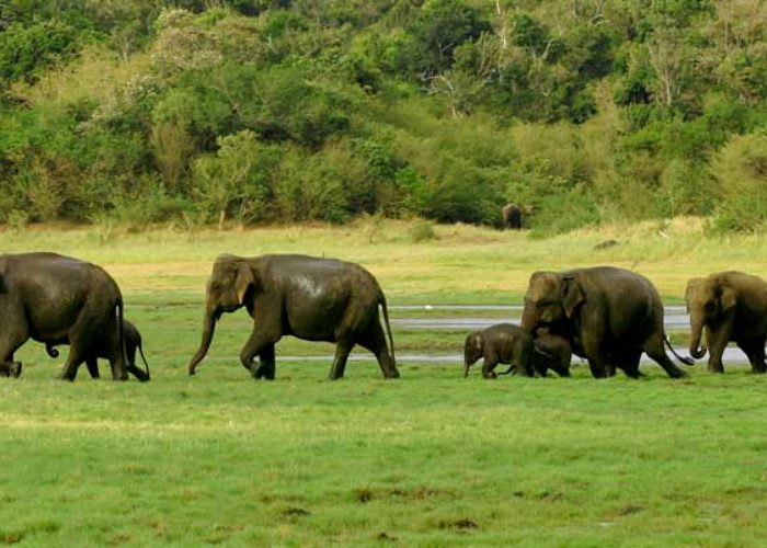 wasgamuwa-national-park3