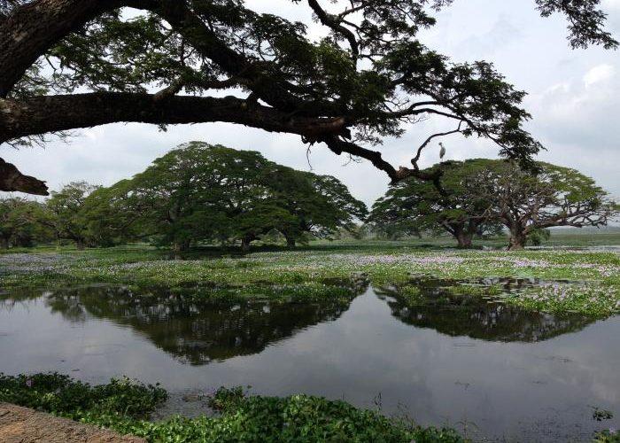 wasgamuwa-park1