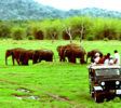 wilpattu-national-park-11