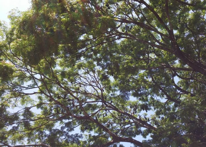Royal Botanic Garden 16 Kandy