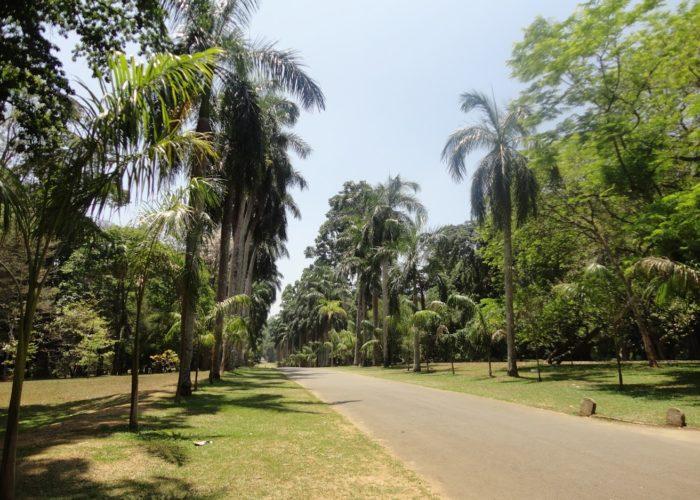 Royal Botanic Garden 1 Kandy