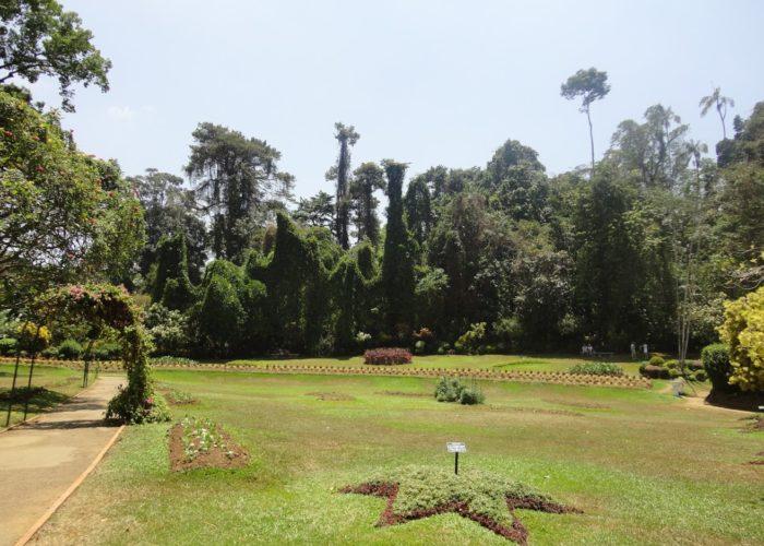 Royal Botanic Garden 5 Kandy