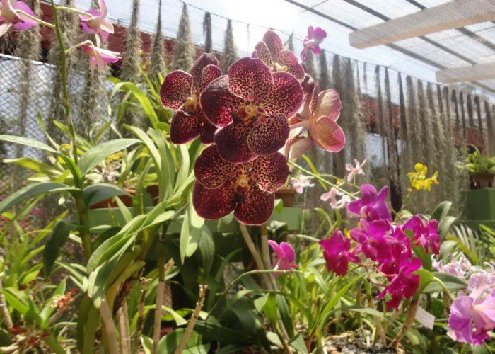 Royal Botanic Garden 4 Kandy 4