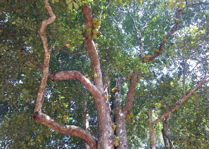 Royal Botanic Garden 15 Kandy
