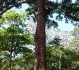 Royal Botanic Garden 18 Kandy
