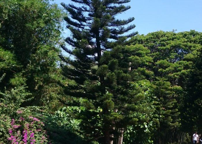 Royal Botanic Garden 17 Kandy