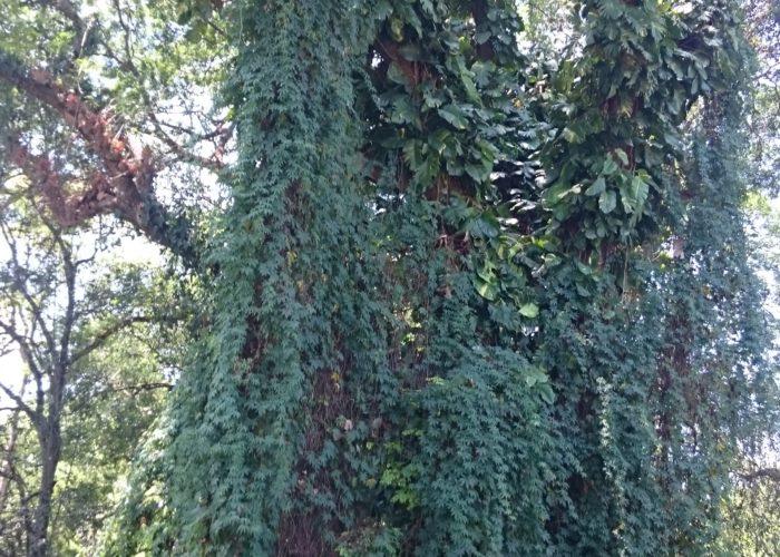 Royal Botanic Garden 21 Kandy