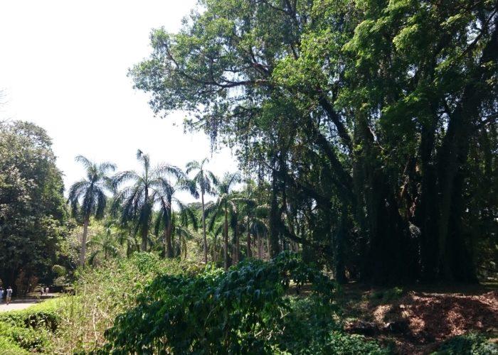 Royal Botanic Garden 14 Kandy