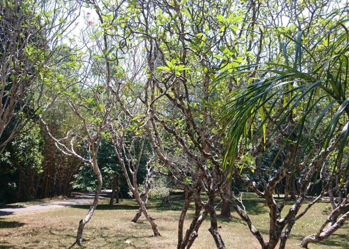 Royal Botanic Garden 13 Kandy