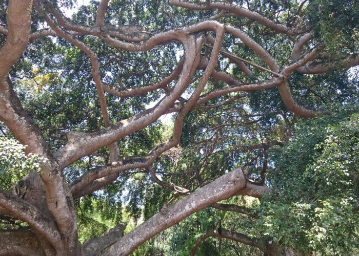 Royal Botanic Garden 12 Kandy