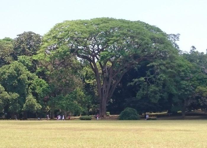 Royal Botanic Garden 11 Kandy