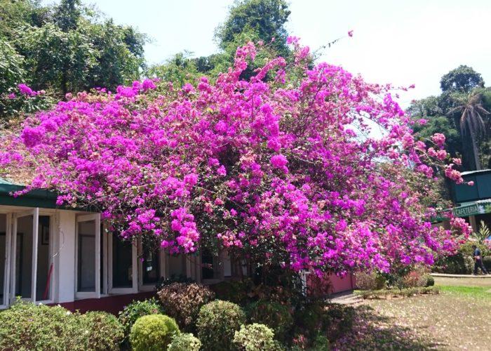 Royal Botanic Garden 10 Kandy