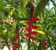 Royal Botanic Garden 8 Kandy