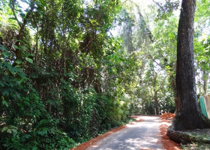 Henarathgoda Botanical Garden 12 Gampaha