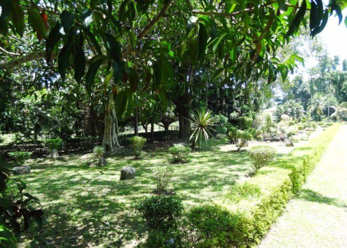 Henarathgoda Botanical Garden 3 Gampaha