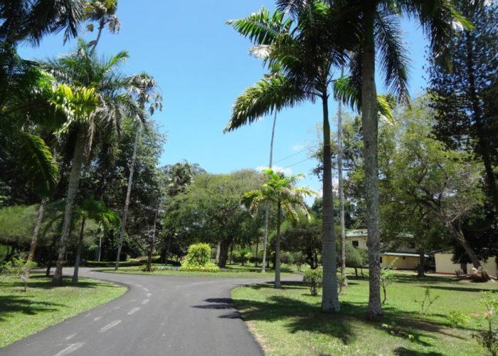Henarathgoda Botanical Garden 5 Gampaha