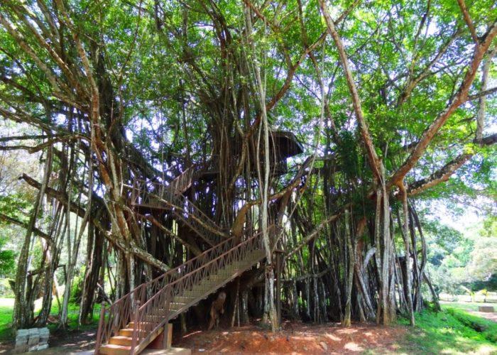 Henarathgoda Botanical Garden 18 Gampaha