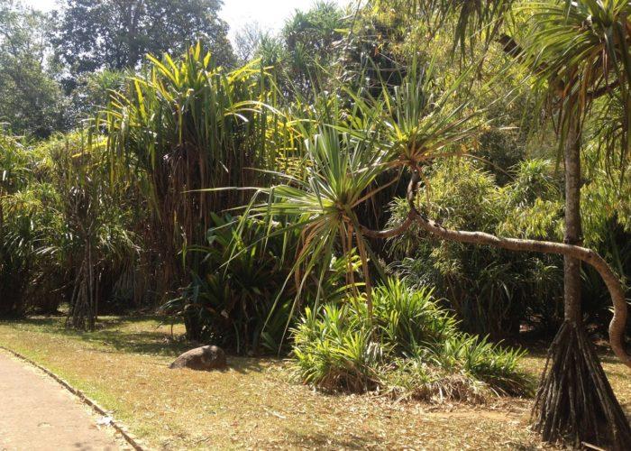 Royal Botanic Garden 3 Kandy