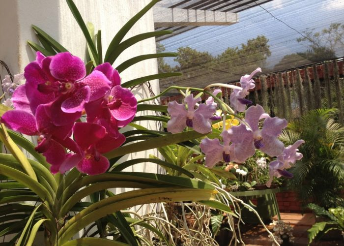 Royal Botanic Garden 2 Kandy