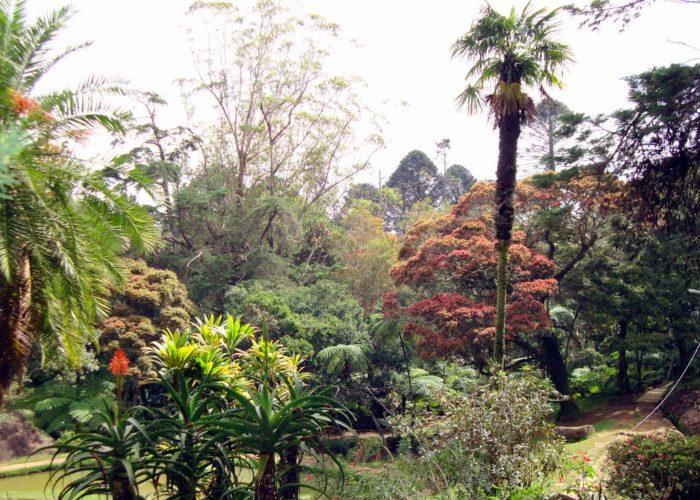 Hakgala 5 Botanical Gardens