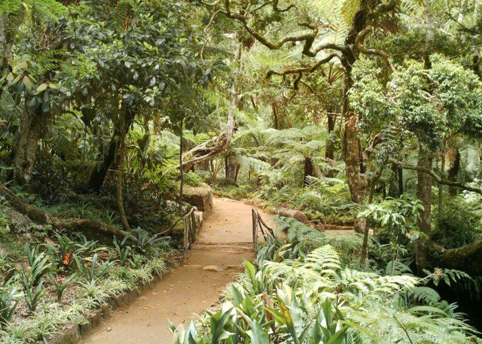 Hakgala Botanical Gardens 3