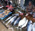 Fish-Market-Negombo-2