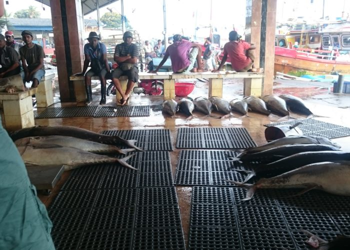 Fish-Market-Negombo