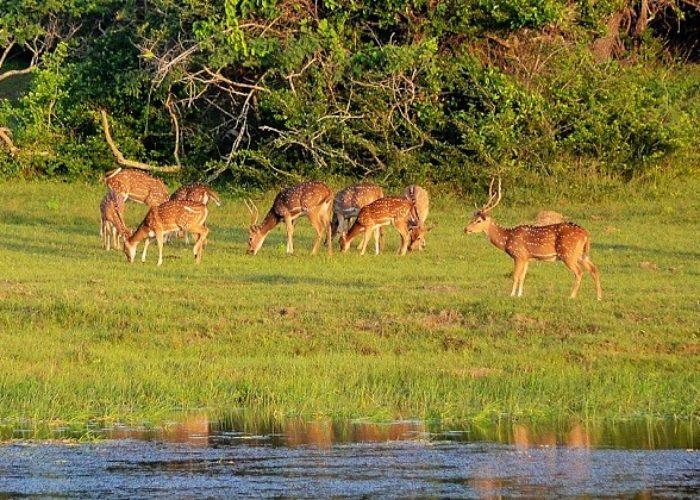 Lahugala Sanctuary park