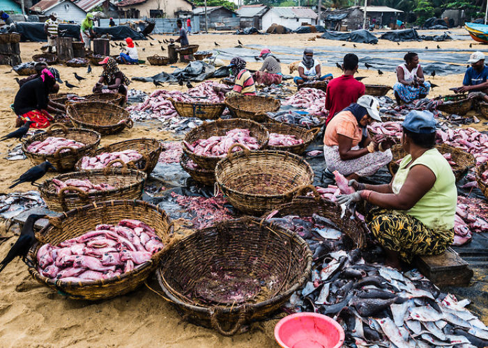 negombo-fishmarket-Lellama-fish