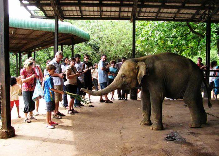 Pinnawala-Elephant-orphanage-1