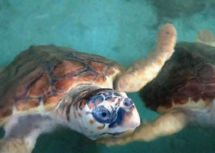 Sea-turtles-conservation-station-2-1