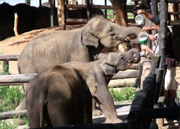 Udawalawa-Elephant-Orphanage-1