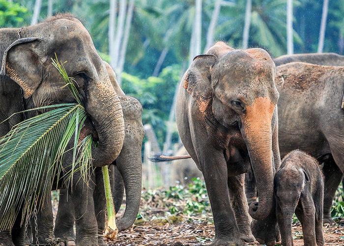 Udawalawa-Elephant-Orphanage-3