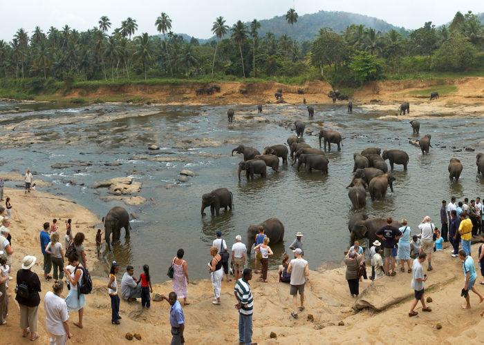 Udawalawa-Elephant-Orphanage