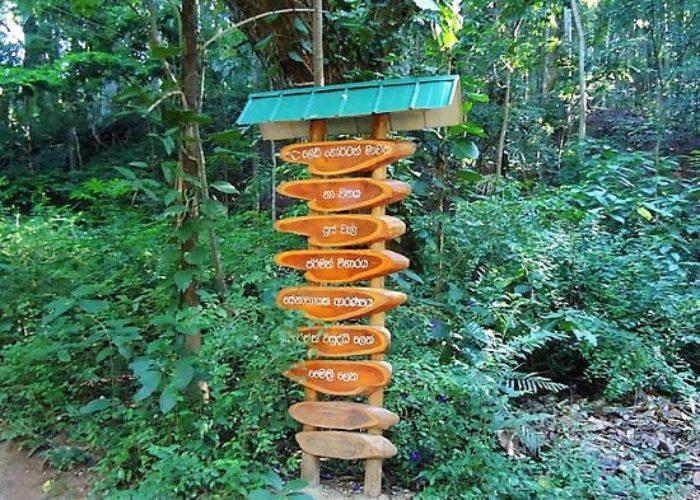 Udawatta Sanctuary 1