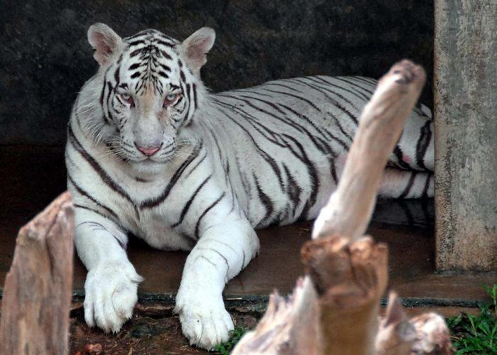 Dehiwala-zoo