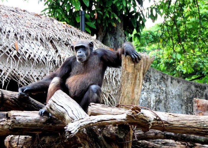 Dehiwala-zoo-3