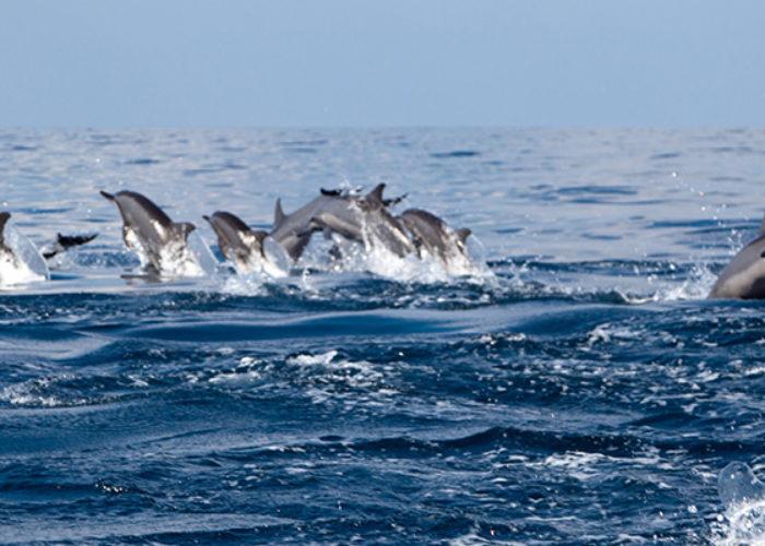 dolphin-watching-Kalpitiya