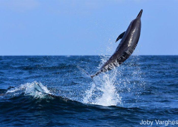 dolphin-watching-Kalpitiya-srilanka