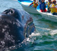 dolphins-inside-big